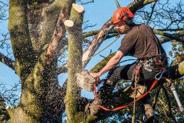 élagage abattage d'arbres et arbustes