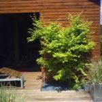 bois et végétation exotique