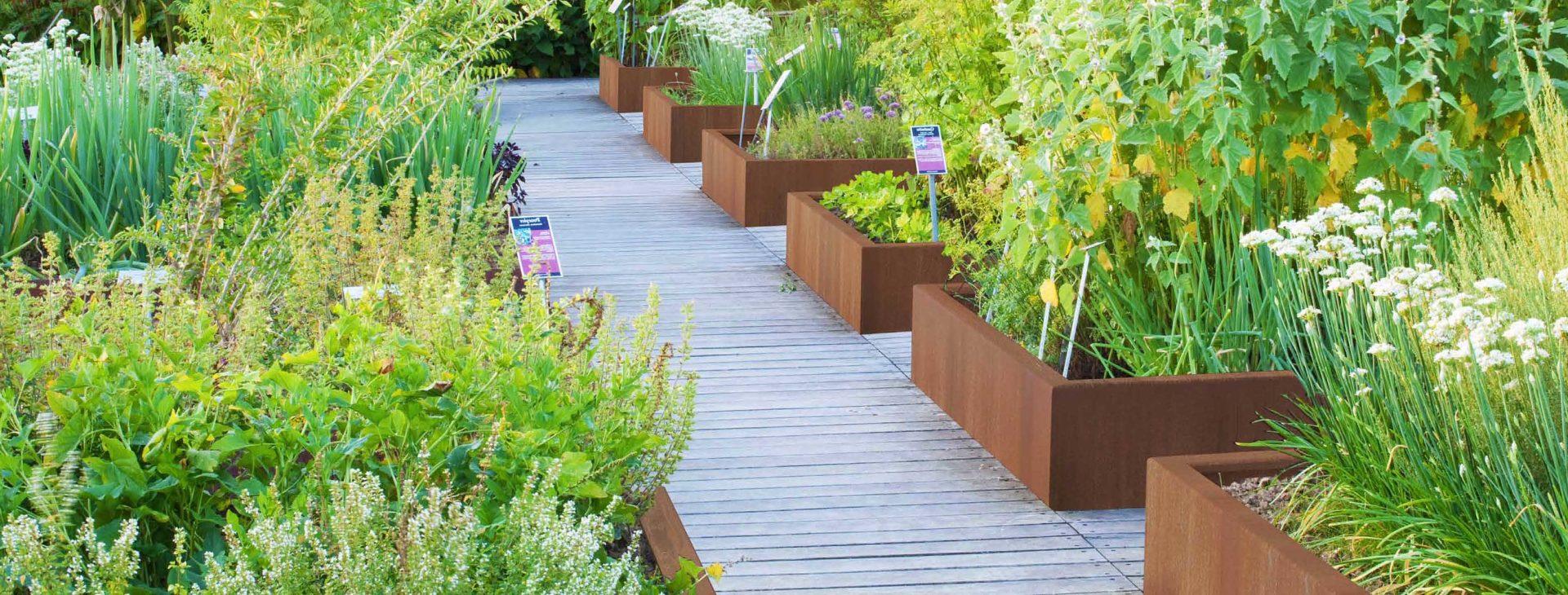 jardin potager surelevé avec bordures bacs en acier corten